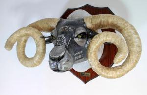 Large Blackface Ram